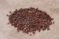 какао фасолей Стоковая Фотография