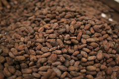 какао фасолей зажарило в духовке Стоковое Изображение