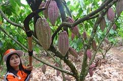 Какао Стоковое Изображение