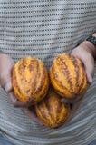 какао Стоковое фото RF