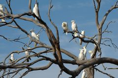 Какаду на дереве стоковое фото