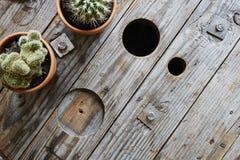 2 кактуса на используемом взгляде деревянного тросового ролика промышленном Стоковая Фотография RF