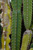 Кактусов предпосылка в большинстве стоковые фото