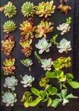 Кактусы висят на стене стоковое фото rf