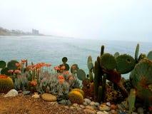 Кактусы встречают побережье Стоковая Фотография RF
