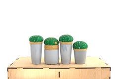 Кактусы в баках Стоковое Фото