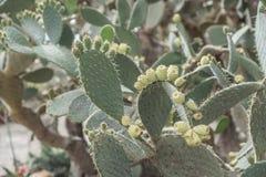 Кактусы в ботаническом саде стоковые фото