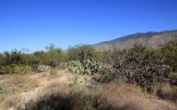 Кактусы в национальном парке стоковая фотография rf
