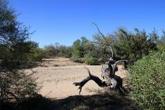 Кактусы в национальном парке стоковое фото