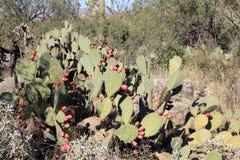 Кактусы в национальном парке стоковые изображения