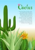 Кактусы и плакат succulents Стоковое Изображение