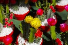 Кактусы и цветки стоковое фото rf