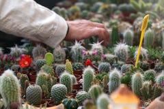 Кактусы и Succulents стоковое изображение