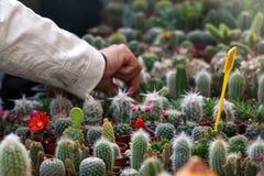 Кактусы и Succulents стоковая фотография rf
