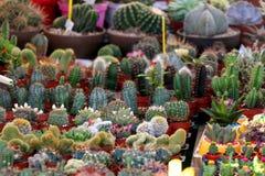 Кактусы и Succulents стоковые изображения rf