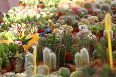 Кактусы и Succulents стоковое фото