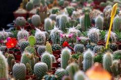 Кактусы и Succulents стоковые фото