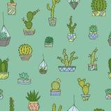 Кактусы, установленные succulents Стоковое Фото