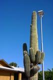 Кактус в Аризоне Стоковые Изображения RF
