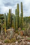 Кактус в ботаническом саде стоковые фото