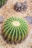Кактус в ботаническом саде Стоковое фото RF