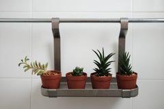 Кактус в ванной комнате Стоковая Фотография