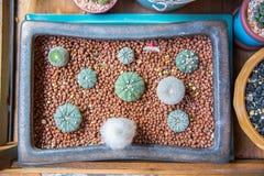 Кактус в квадратном подносе вазы Стоковые Фото