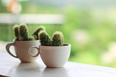Кактус в кофейной чашке Стоковые Фотографии RF