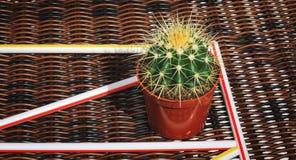 Кактус в красных цветочном горшке и питье вставляет на причудливом bac лозы Стоковое Изображение RF