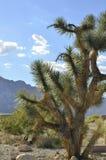 Кактус в ландшафте горы пустыни Мохаве Стоковое фото RF