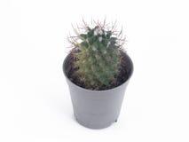 кактус в мини пластичном баке Стоковые Фото