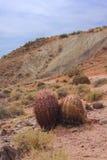 Кактус в долине огня Стоковые Изображения RF