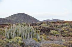 Кактус в пустыне Стоковые Изображения