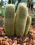 Кактус в саде Стоковое Изображение RF