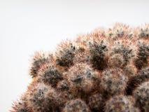 Кактус в свете Стоковое Изображение RF
