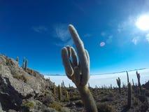 Кактус в соли Uyuni плоском Стоковые Фото