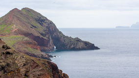 Кактус гор и скал Мадейры Стоковое Фото