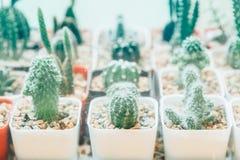 Кактус, завод, белизна, succulent, стекло, дом, бак, ваза, предпосылка, в горшке, succulents, украшение, малое, таблица, терра Стоковые Изображения RF