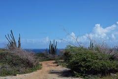 Кактус и голубые небеса Стоковые Фото