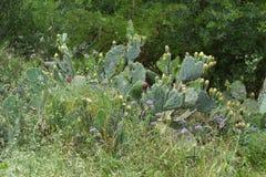 Кактус и цветки Стоковое фото RF