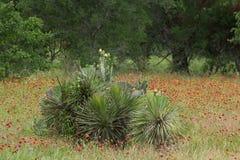 Кактус и цветки Стоковая Фотография RF