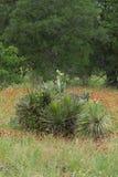 Кактус и цветки Стоковые Изображения