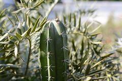 Кактус и succulent в саде Стоковые Изображения RF