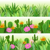 Кактус и succulent Стоковое фото RF