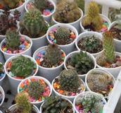 Кактус и succulent Стоковая Фотография