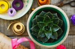 Кактус и wrappings камня розовые на деревянном столе Стоковые Фотографии RF