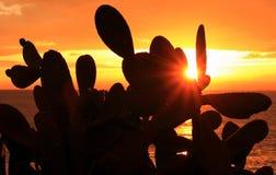 Кактус на заходе солнца стоковая фотография