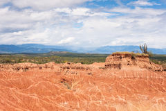 Кактус на пустыне Стоковые Изображения RF