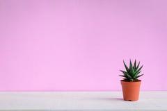 Кактус на столе с сладостными розовыми стенами Стоковая Фотография RF