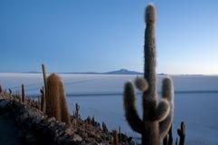 Кактус, остров Incahuasi Стоковые Фото